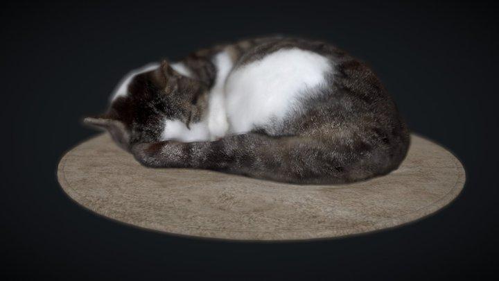 Sleeping on a mat cat 3D Model