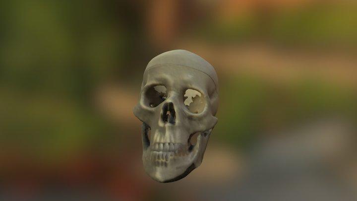 Skeleton Skull 3D Model