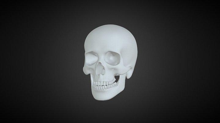 Skull basemesh 3D Model