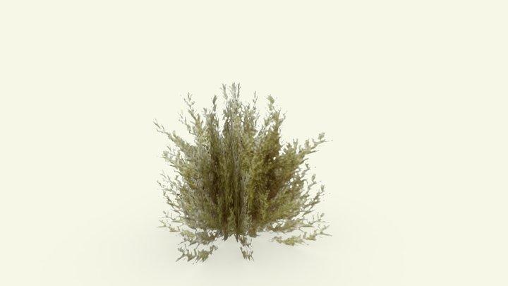 Bush Test 3D Model