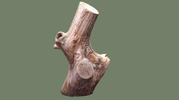 Tree Stomp Photoscan 3D Model