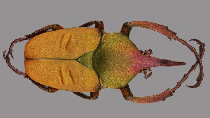 Theodosia rodriguezi 3D Model