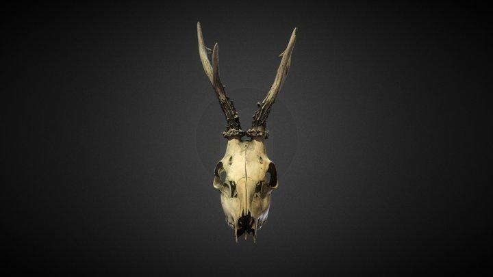 DeadlySkullPack  vol.01 Model One 3D Model