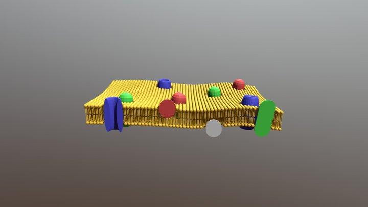 Plasma Membrane 3D Model
