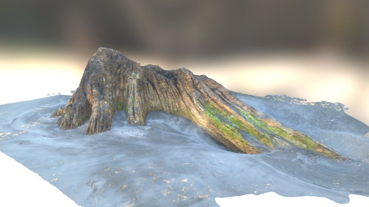 Driftwood on Ohope Beach, NZ 3D Model