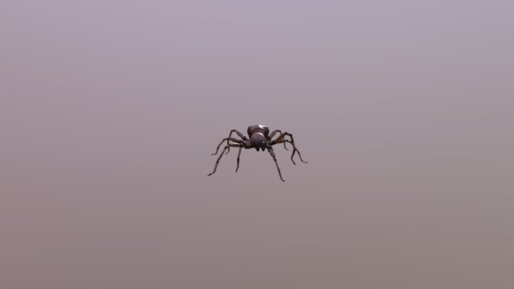 Spider Animated 3D Model
