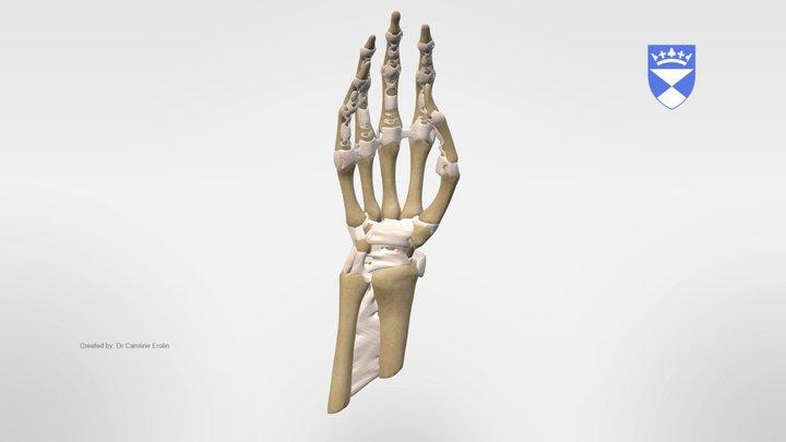 LIGAMENTS 3D Model