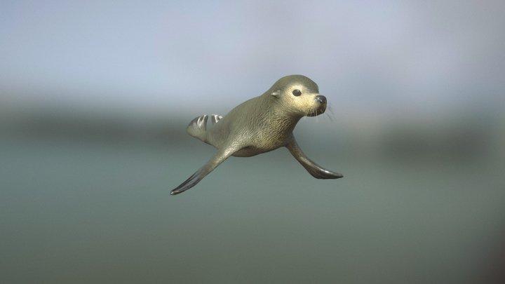 Subantarctic Fur Seal 3D Model