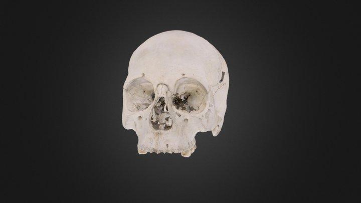 Human skull recovered from Esmeralda (1879) 3D Model