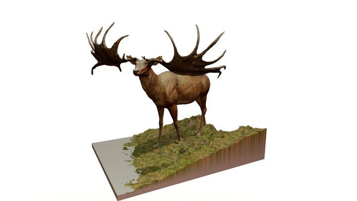 Mégacéros 3D Model