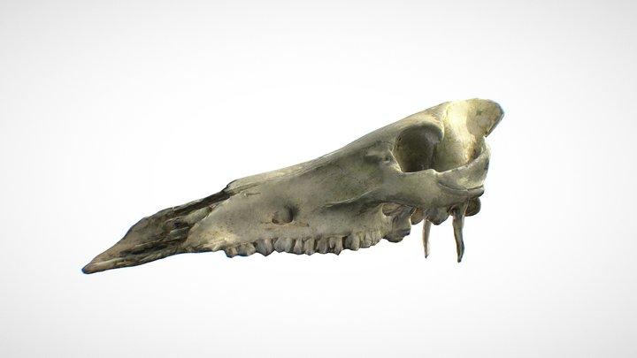 Deer skull. Free 8K PBR 3D-scan 3D Model