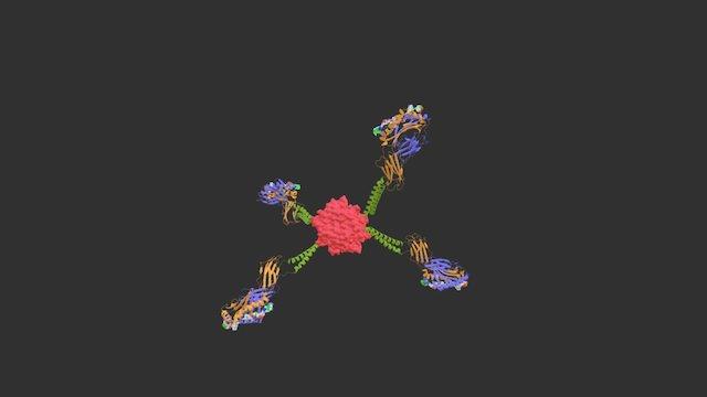 Tetramer Model 3D Model