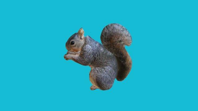 JR squirrel 3D Model
