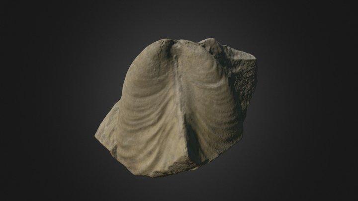 Bivalve Retroceramus porrectus 3D Model