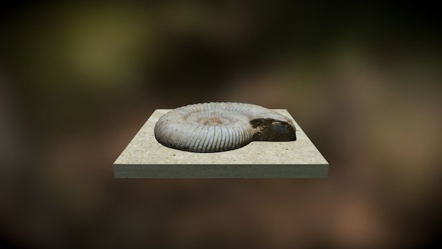 Fossil 3D Model
