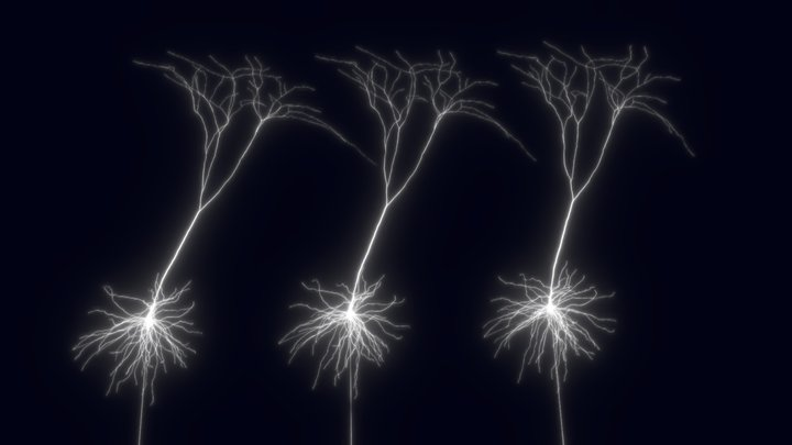 Action Potentials in Demyelinated Axons (MS) 3D Model