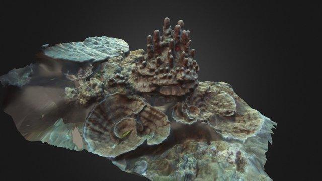 American Samoa 1 3D Model