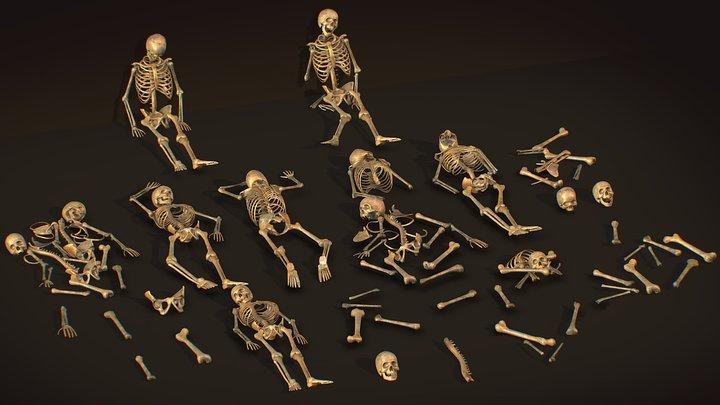 remains skeleton bone big pack 3d model 3D Model