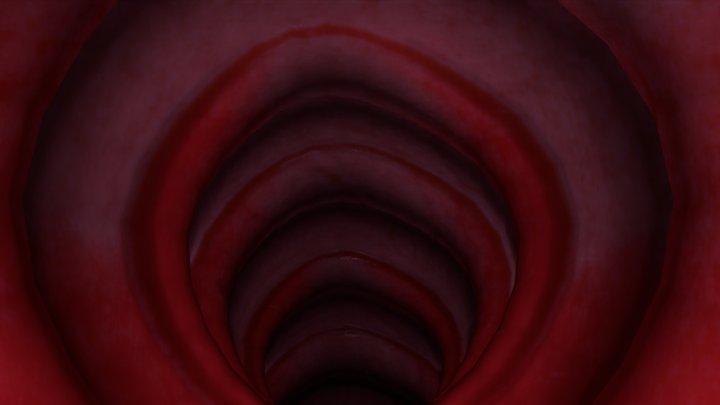 Stylized Trachea Passage 3D Model