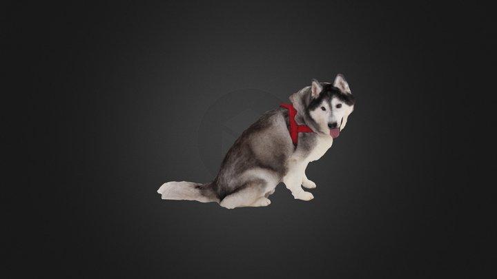 Scanned Husky Dog 898 3D Model
