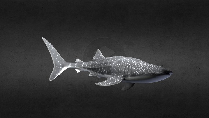 Whale Shark with Light 3D Model