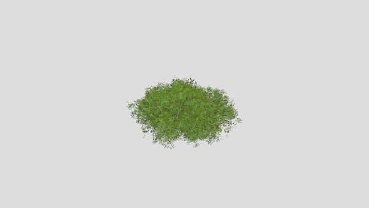 Simple Tree 3D Model