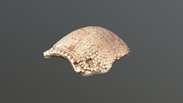 Glyptodon carapace 3D Model