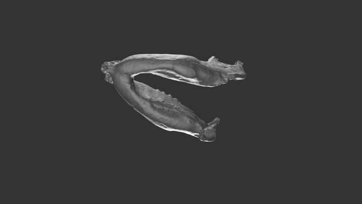 Mammut pacificus mandible 3D Model