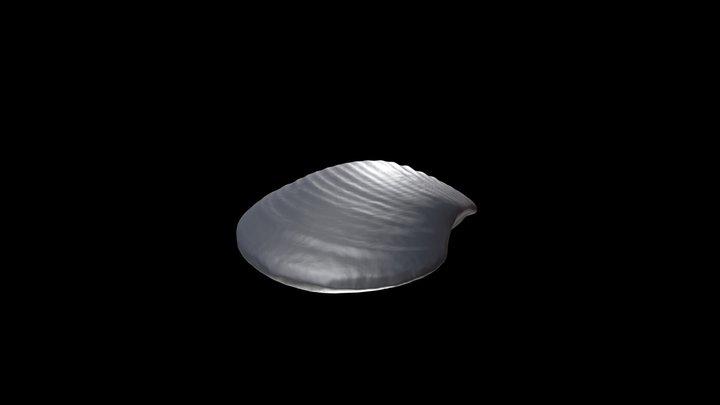 Astarte undulata 3D Model