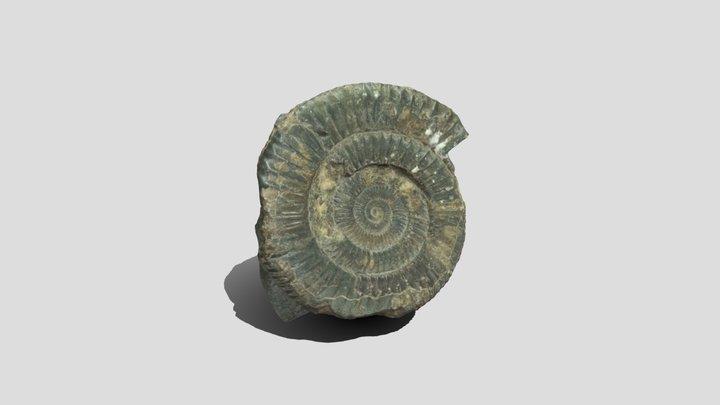 Ammonite JPG 3D Model