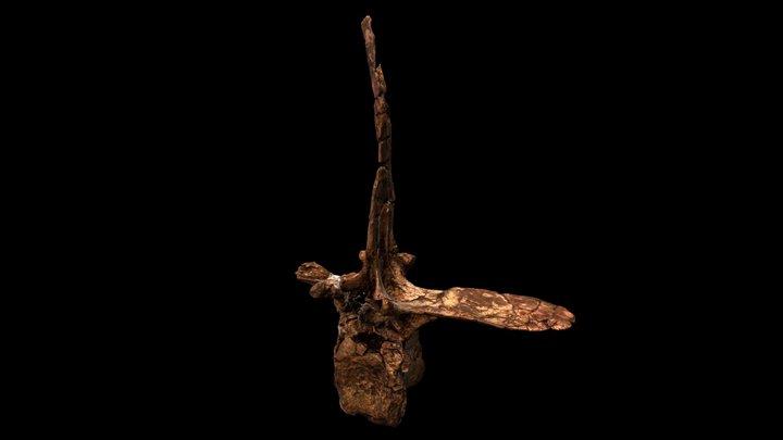 Ca4 - Spinosaurus aegyptiacus neotype 3D Model
