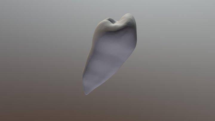 下颌第二前磨牙 3D Model