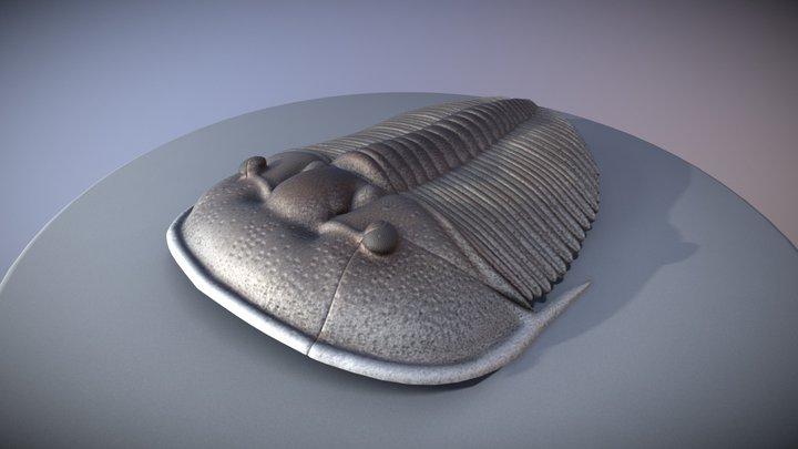 trilobite - Aulacopleura konincki 3D Model