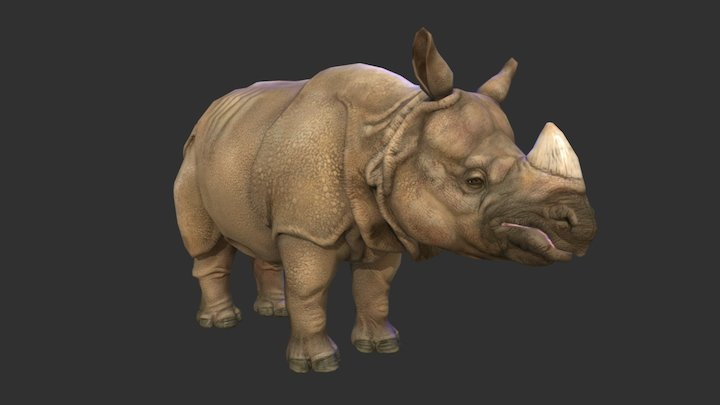 Indian Rhino 3D Model