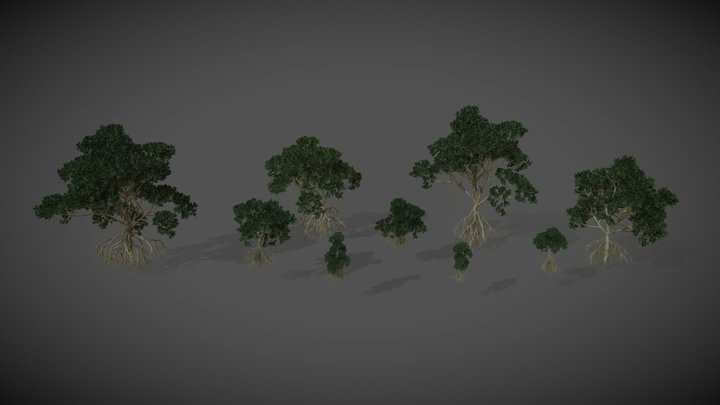 AS16 Rhizophora Mucronata (Asiatic Mangrove) 3D Model