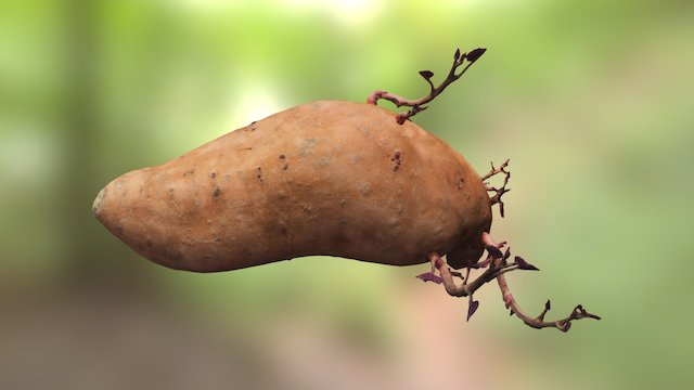 Sprouted Potato 3D Model