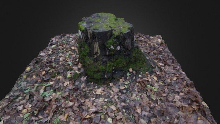 raw 3d scan autumn stump 3D Model