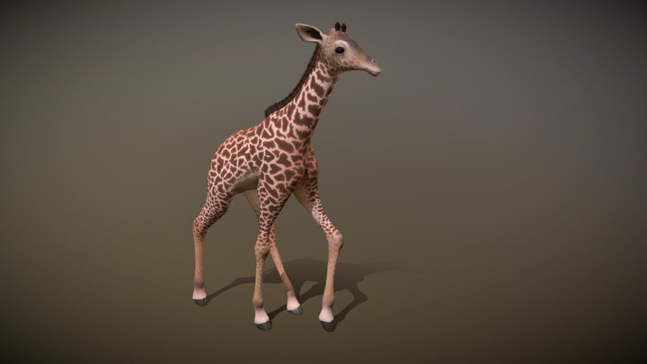 Giraffe Anim 3D Model