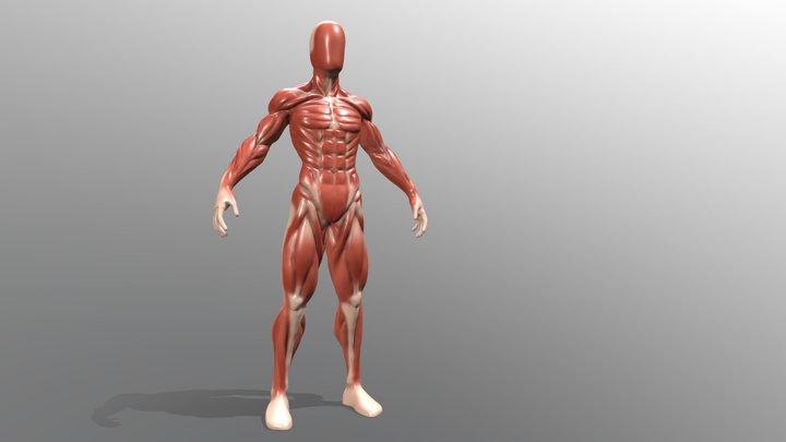2283 - Chloe Franck - Anatomy 3D Model