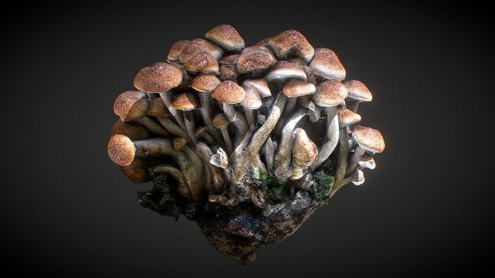 Mushroom strain 3D Model