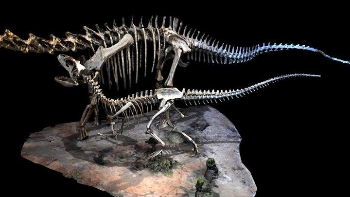 Saurophaganax and Seismosaurus 3D Model