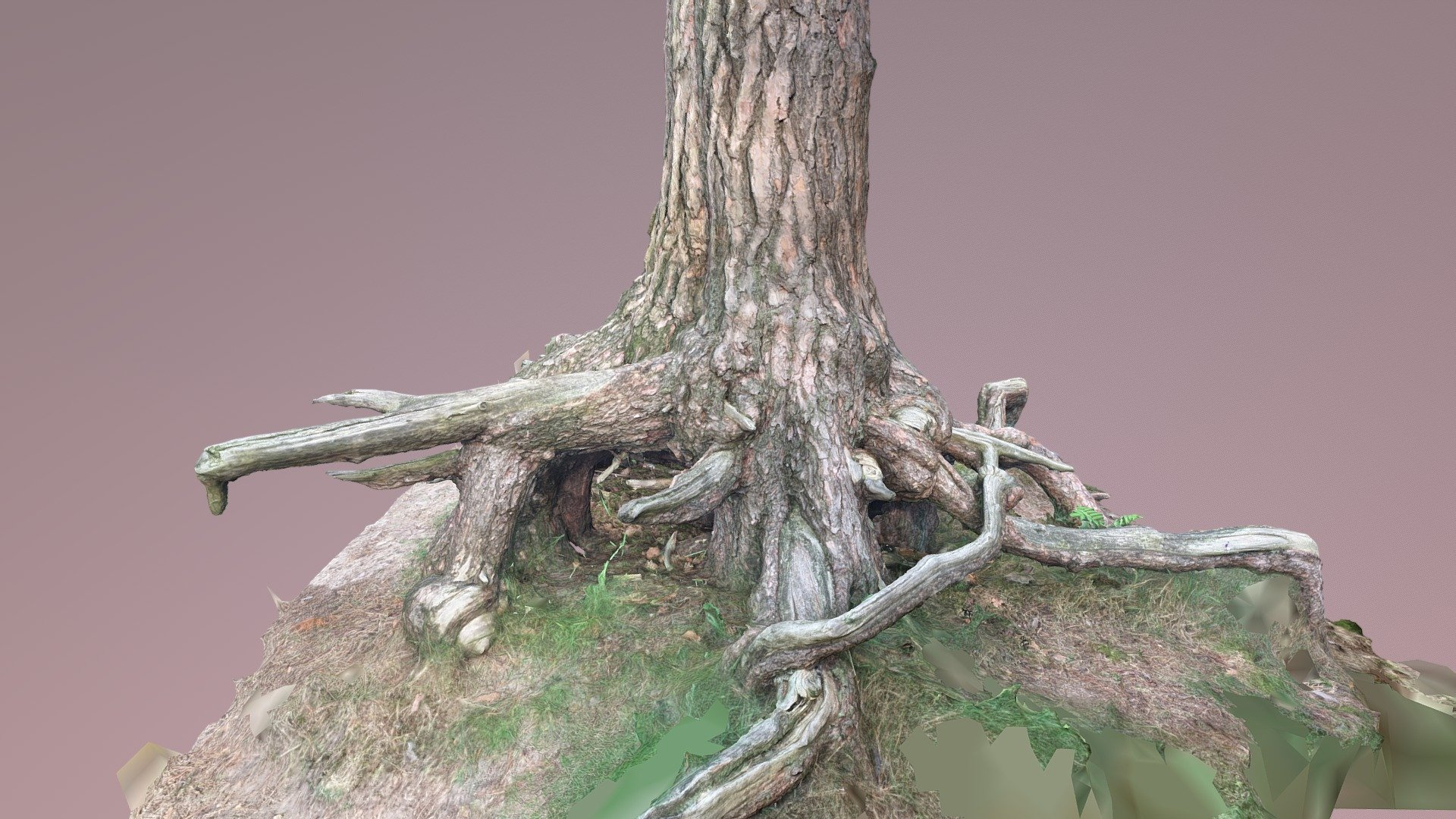 Gnarly Tree 3D Scan - Free download! - Download Free 3D