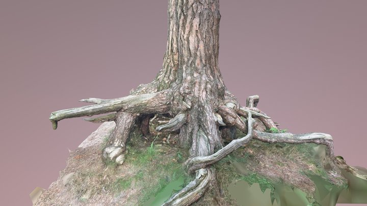 Gnarly Tree 3D Scan - Free download! 3D Model