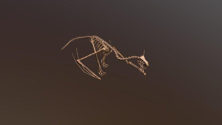Wyvern skeleton 3D Model