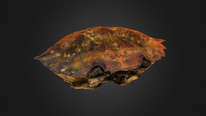 Crab shell 3D Model