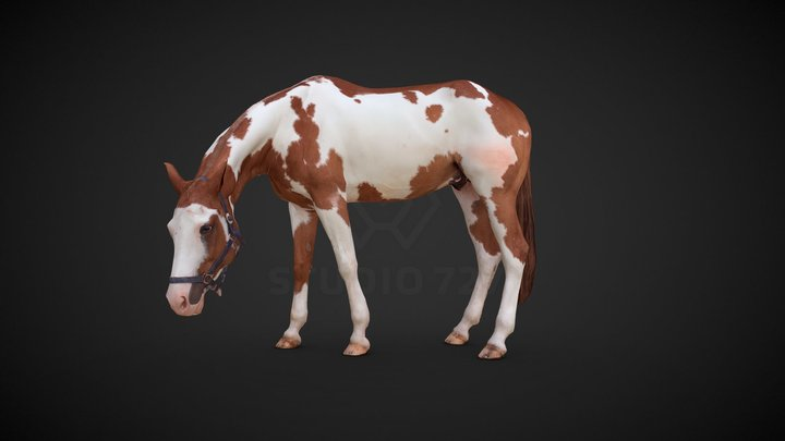 Horse - pose4 3D Model
