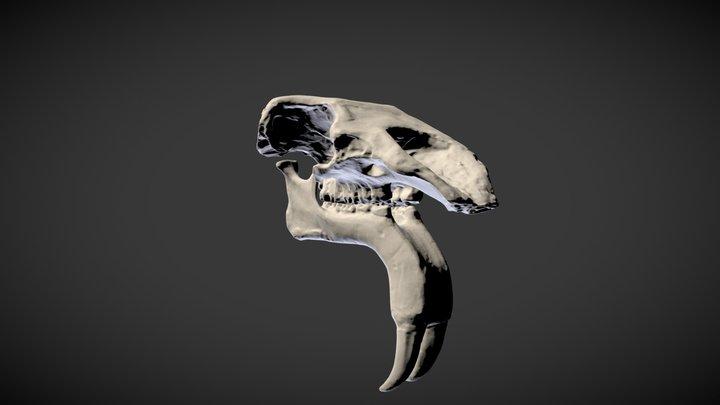 Deinotherium giganteum 3D Model