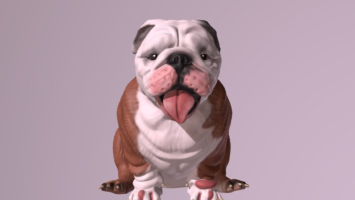 1801003- Alcapone- English Bulldog 3D Model
