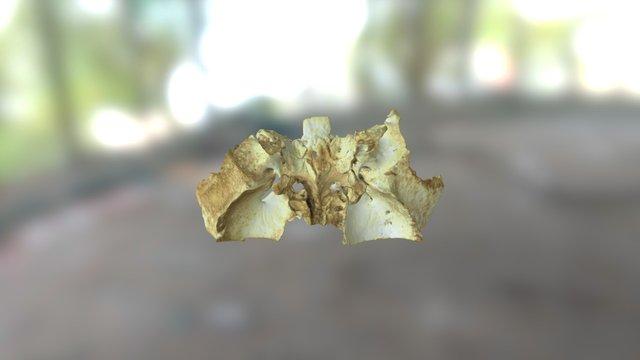 Artec Spider- 3D Kemik Tarama-Sfenoid, Bone Scan 3D Model