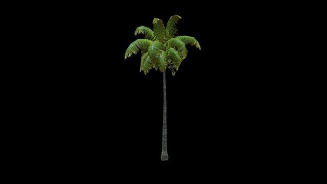 Coconut Palm 4 3D Model